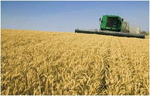 إختيار التقاوى للزراعة